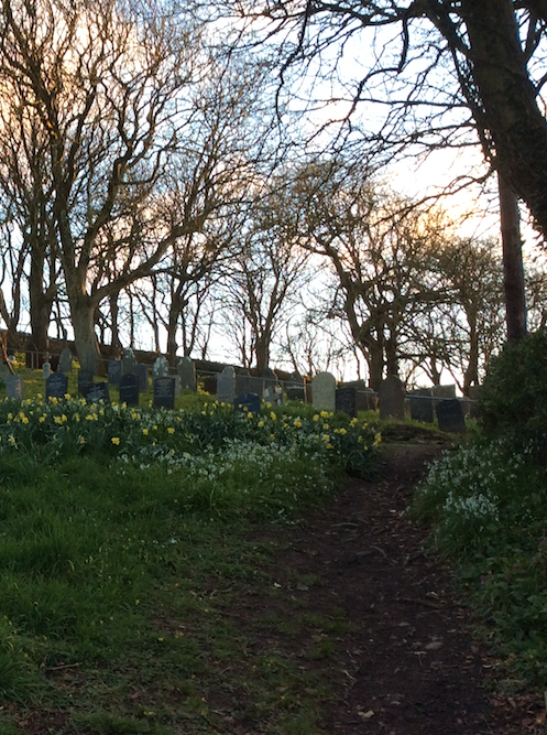 Morwenstow Churchyard with Daffodils Appearing